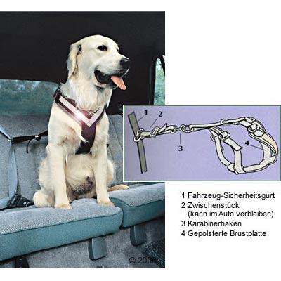 allsafe hondenautogordel      maat l: voor grote honden