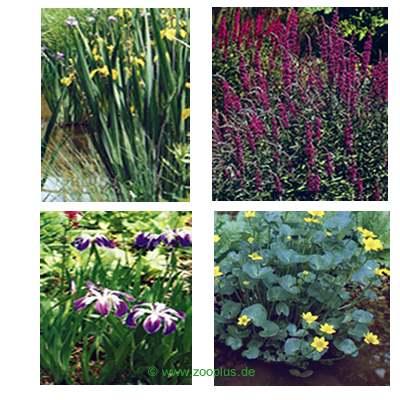 Vijverplanten bloeiende moerasplanten set van wakus     8 planten van kantoor artikelen tip.