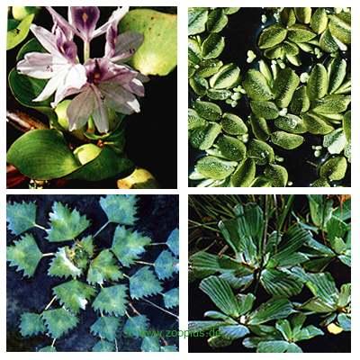 Vijverplanten zwemmende planten set van wakus     8 planten van kantoor artikelen tip.