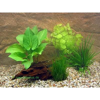 aquariumplanten goudvisbassin potplanten set     4 potplanten