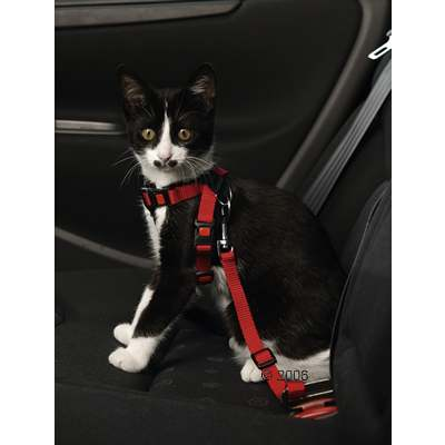autogordel voor katten     15 mm gordelbreedte