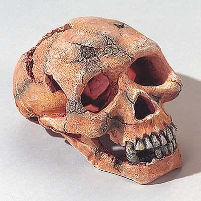 aquariumdecoratie schedel groot     ca. 15 cm