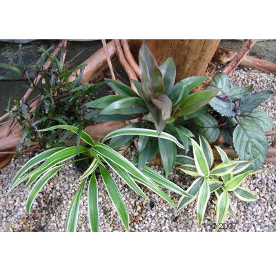 gekleurde set voor vochtterrariums     5 planten