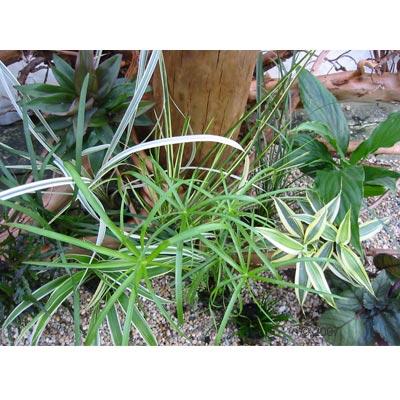 groot vochtterrarium set     12 planten