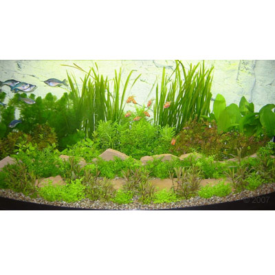 asia onderwaterlandschap type 1     48 planten