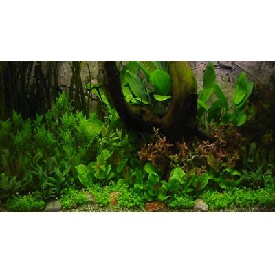 amazone onderwaterlandschap     52 planten