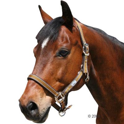 halster supra     pony bruin/goud