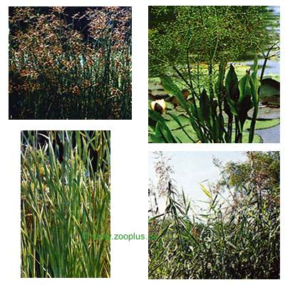 Vijverplanten moeras  en waterset van wakus     8 planten van kantoor artikelen tip.