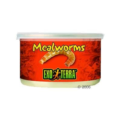 hagen exo terra meelwormen reptielenvoer     34 g