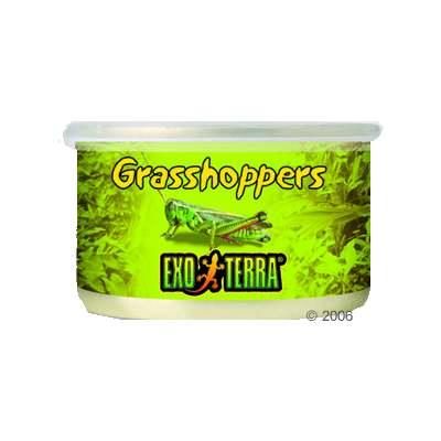 hagen exo terra sprinkhanen reptielenvoer     34 g