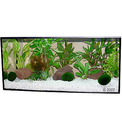 aquariumplanten zooplants bonte mix     13 planten