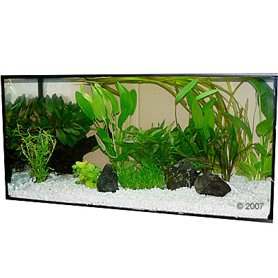 aquariumplanten zooplants luxe lijn klein     14 planten