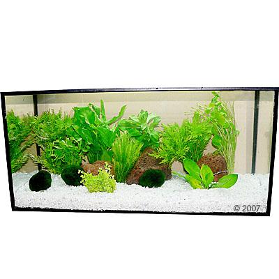 aquariumplanten zooplants lichtgroene oase     13 planten