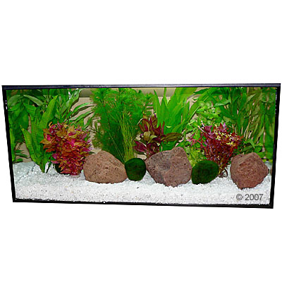 aquariumplanten zooplants rood accent     13 planten