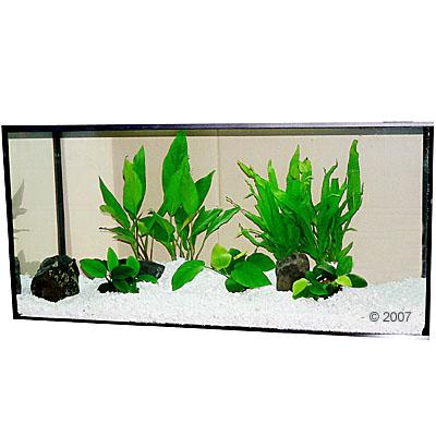 aquariumplanten zooplants baarsbekken     7 planten