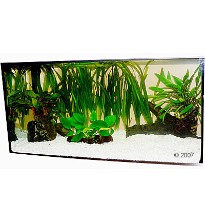aquariumplanten zooplants discus assortiment     13 planten