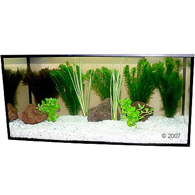 aquariaplanten zooplants goudvis in het water     9 pflanzen