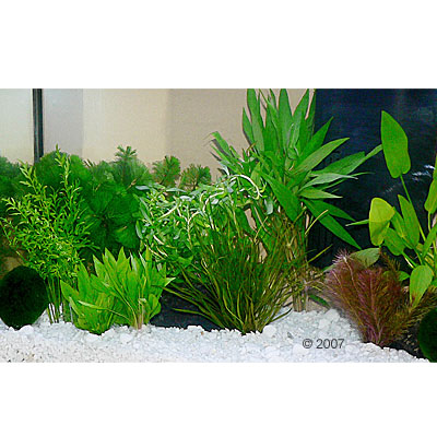 aquariumplanten zooplants guppy platy aquarium     15 planten