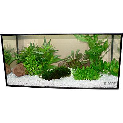 aquariaplanten zooplants woudje     9 pflanzen