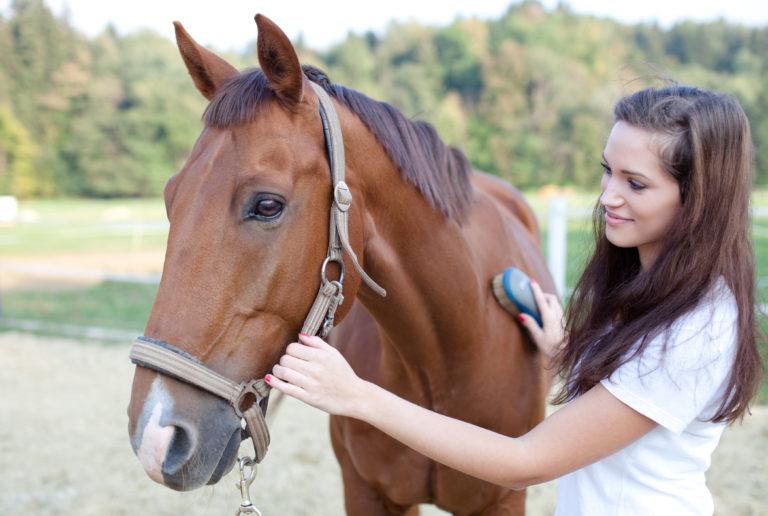 Borstelen van het paard