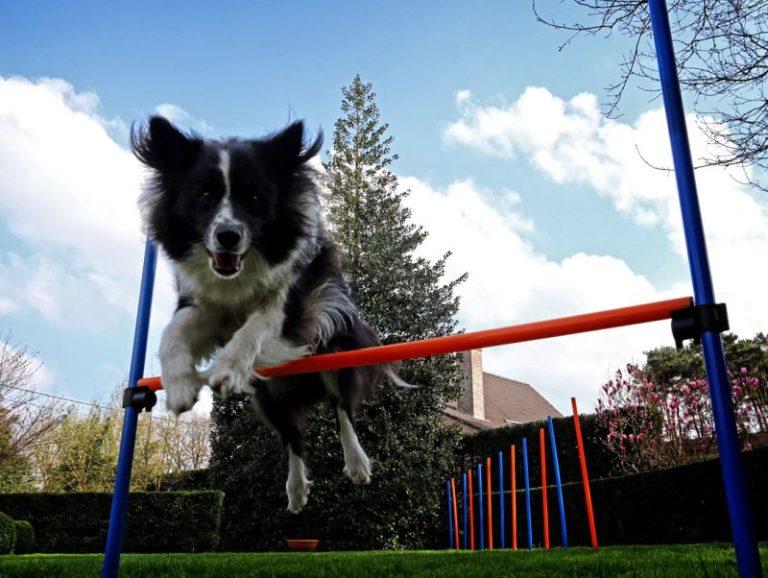 Behendigheid of agility met de hond