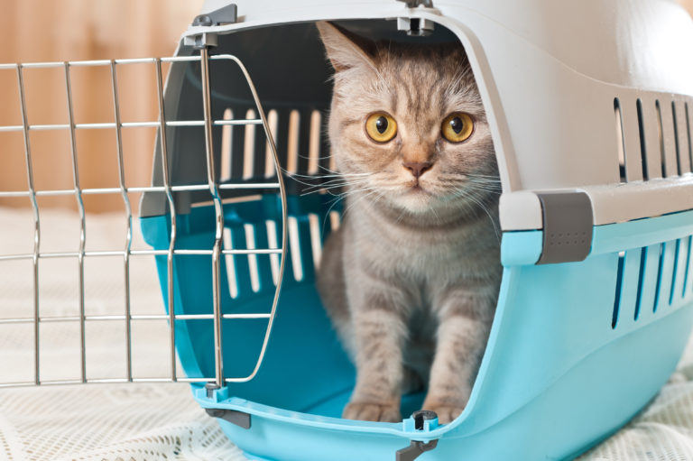 Boottocht met de kat