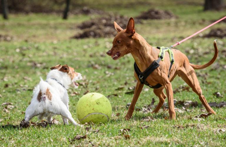 Agressieve honden begrijpen en opvoeden