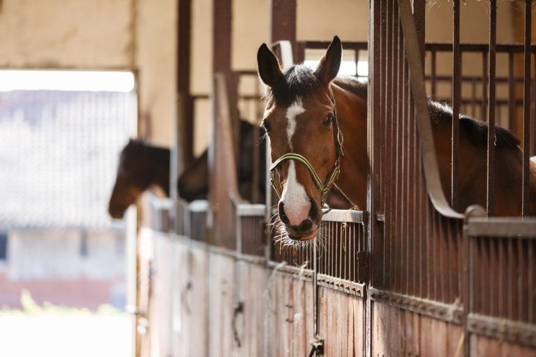 Hoe worden paarden op de juiste manier ondergebracht?