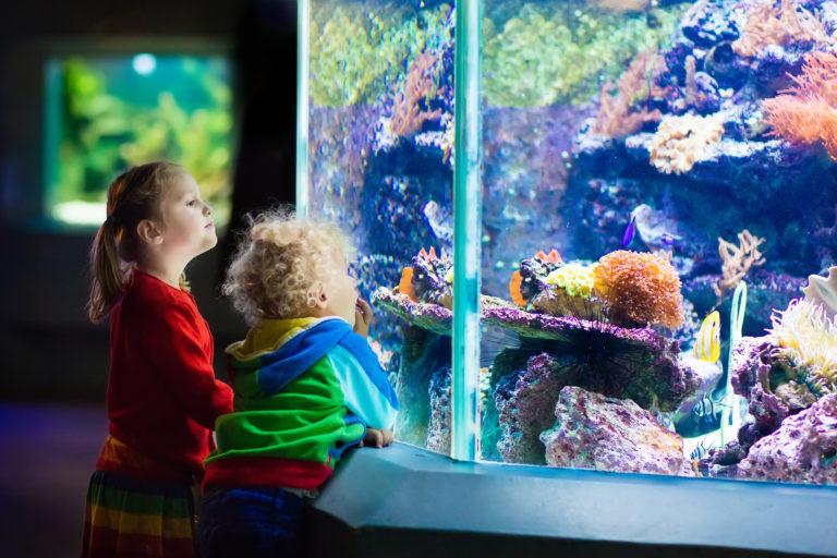 Niet kloppen op een aquarium