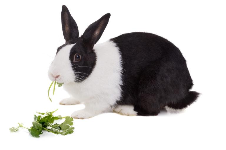 De voedselvoorziening van het konijn