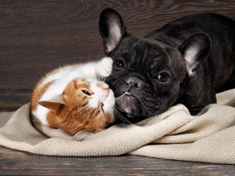 Het samenleven van honden en katten