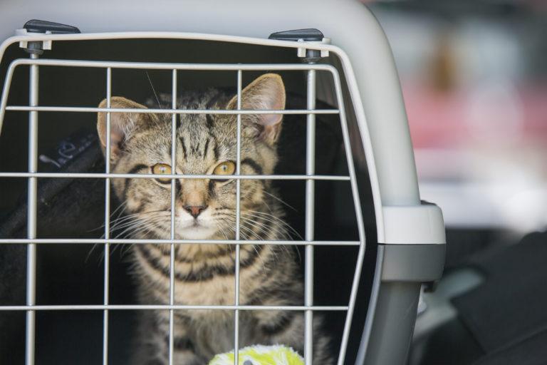 Autorijden met de kat