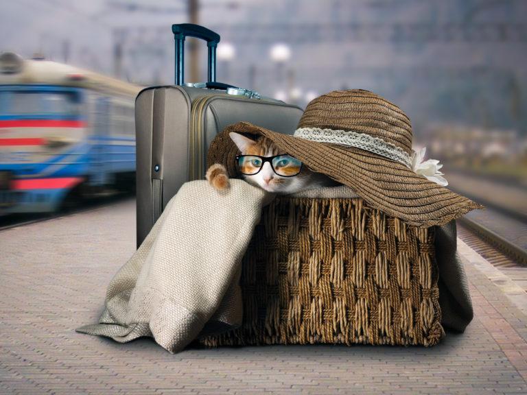 Treinrit met de kat