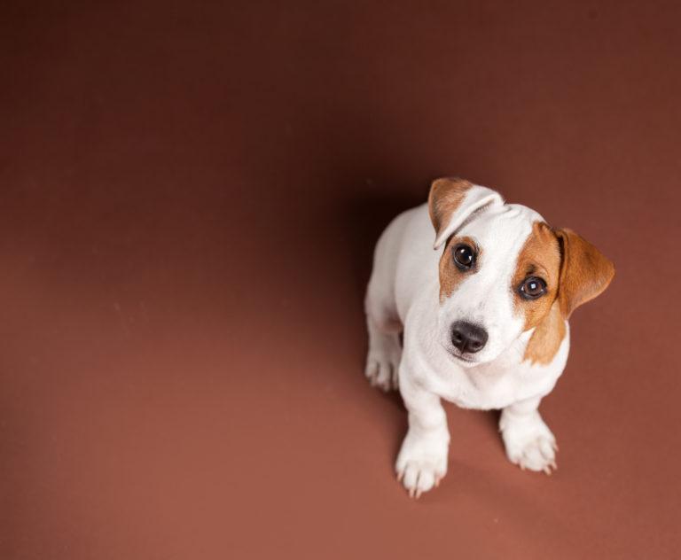 Hondenverzorging: alles over het onderwerp dogsitting