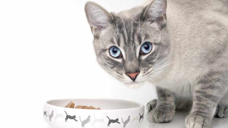 Kattenvoer voor de volwassen kat