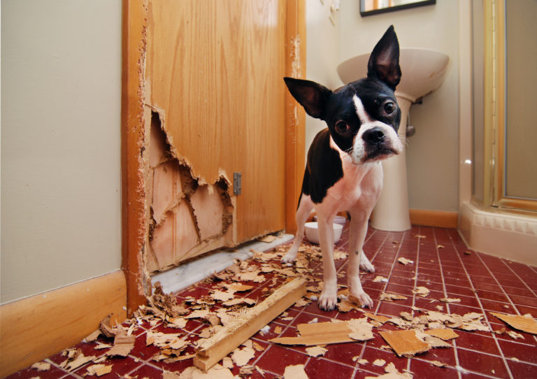 Help mijn hond maakt alles kapot