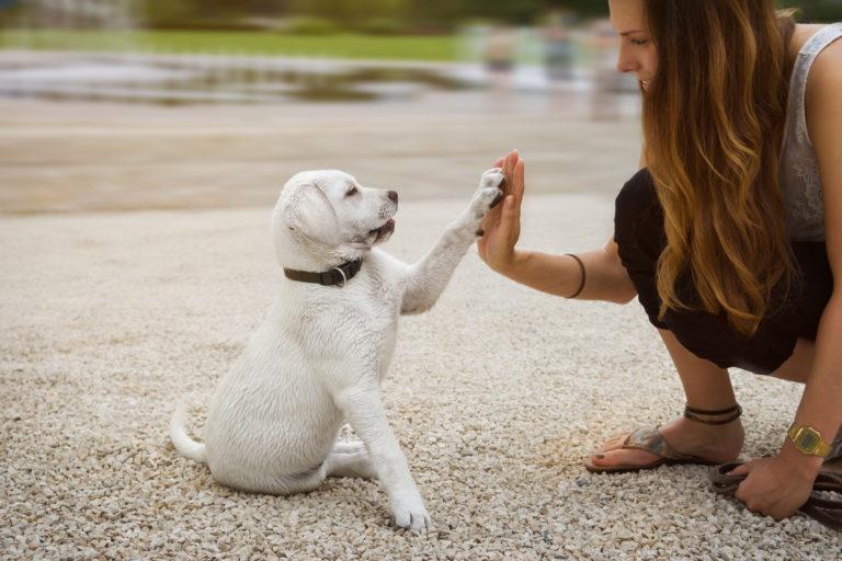 puppy opvoeding