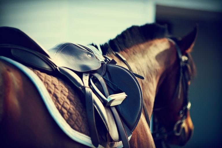 Op zoek naar het juiste paardenzadel