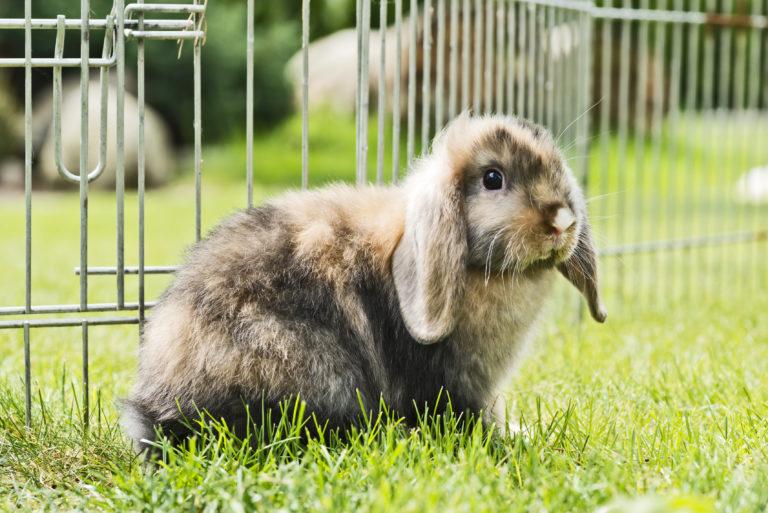 Buitenverblijf – uitloop voor konijn, cavia en co
