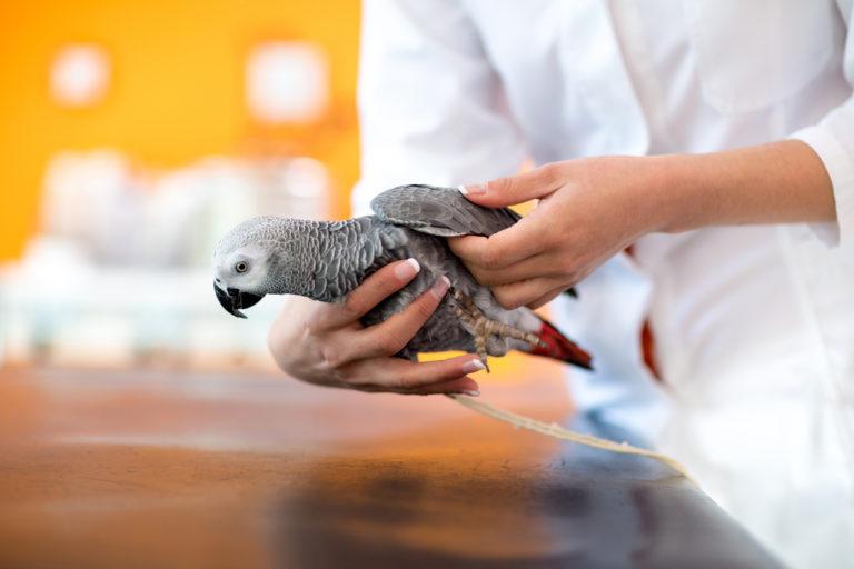 Nierinfectie bij vogels