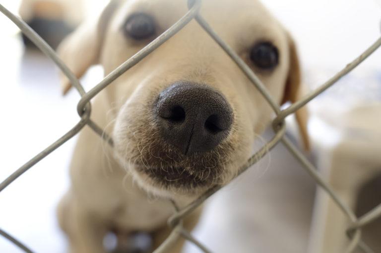 Een hond adopteren: een fokker of het asiel?