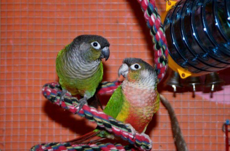 Intelligentiespeelgoed voor vogels