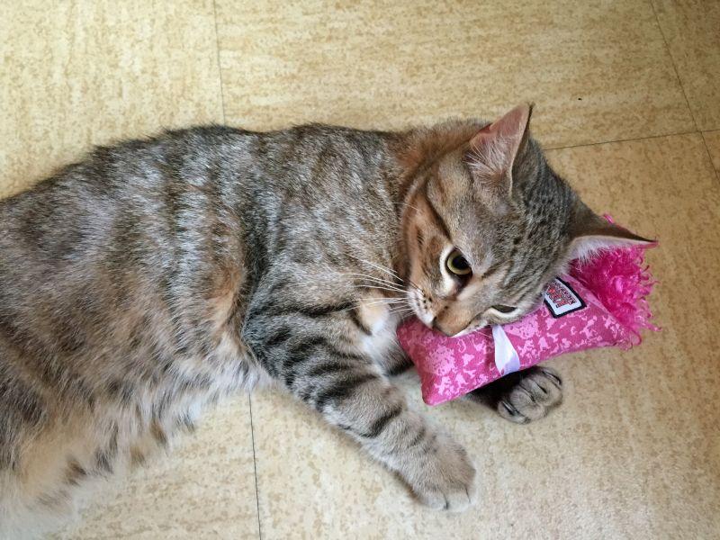 Kat met kattenkruidspeeltje