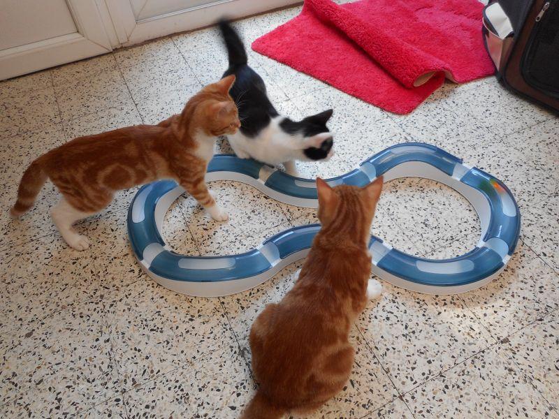 Katten met speelrails