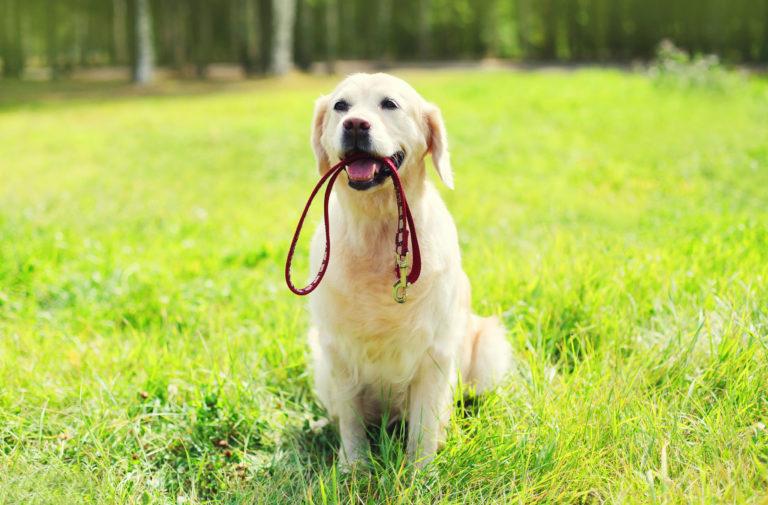 Hond met hondenlijn