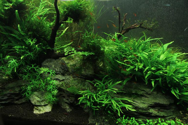 Algen in het aquarium