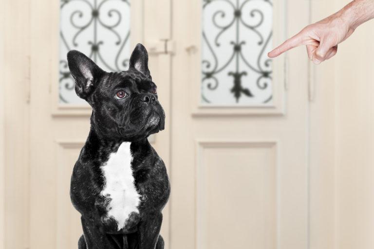 Ongehoorzaamheid bij honden