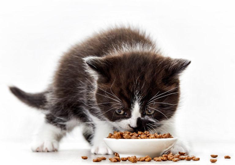 Het juiste kattenvoer voor een kitten