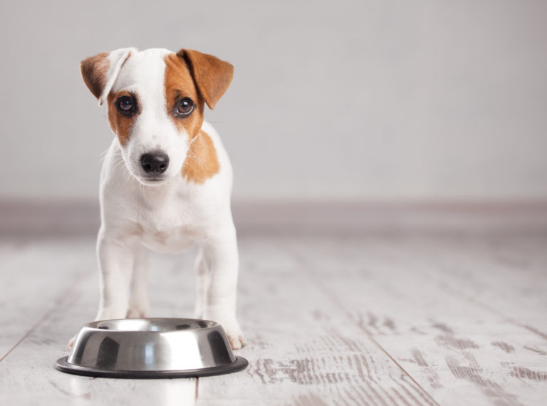 De juiste hondenvoerbak kiezen
