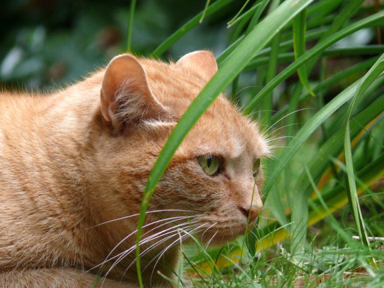 Bedwelmende grassen